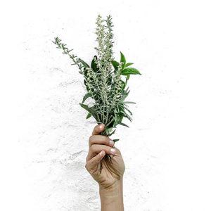 Medicinal Plants Analytical Standards