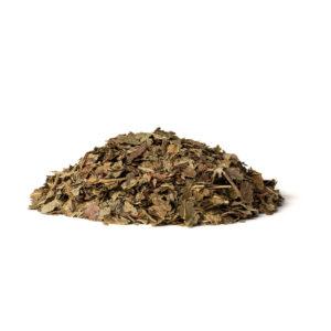 Blackcurrant (Ribes nigrum L.)